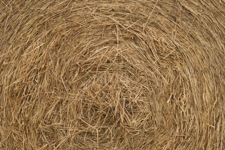 Texture with close up to round haystack with dry crops photo