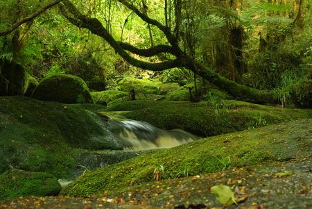 undergrowth: stream II