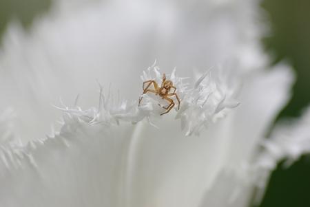 spider macro close up achtergrond gratis