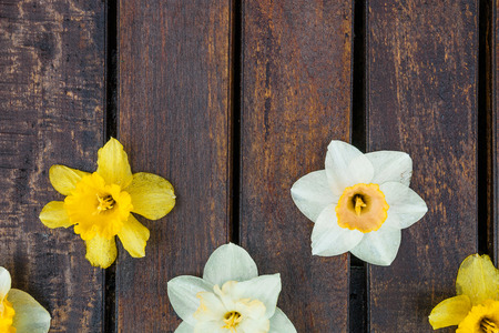 jonquil: Narcissus on wooden background. yellow and white flowers on dark wooden background, place for text. Stock Photo
