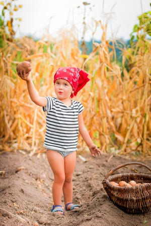 red bandana: Baby girl on the garden with harvest of potatoes in the basket near field of dry corn on background. Dirty child in red bandana and stripe tee collects potato harvest in the basket.