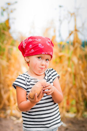 Baby girl on the garden with harvest of potato in her arms near field of dry corn on background. Dirty child in red bandana and stripe tee collects potato harvest in the basket.