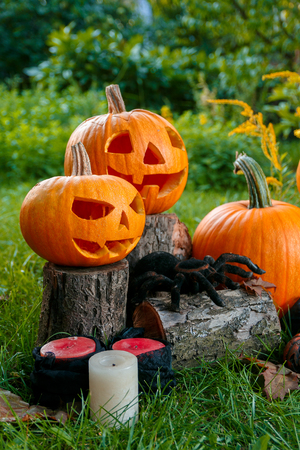 Halloween. Jack-o-Lantern. scary pumpkin with a smile near candles and spider in green forest, outdoor.