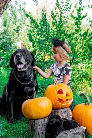 Halloween. Child dressed in black  near labrsdor beatween jack-o-lantern decoration, trick or treat. Little girl with dog near pumpkin in the wood, outdoors. Love
