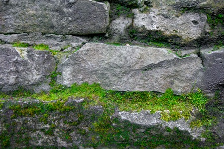 Moss and stone background. Texture of brick wall.  The old rock in the wood moss-grown.