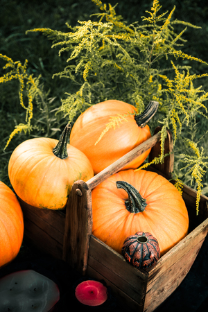 Halloween. Pumpkins in a box near Jack-o-Lantern and candles in green forest, outdoor. Decoration. Toned photo. Top view. Thanksgiving Day. Stock Photo