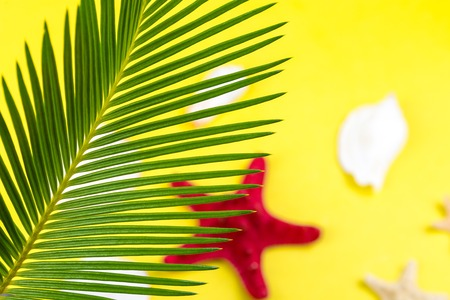 Tropical Background Palm Trees Branches with blurred starfish on yellow background. Holiday. Travel. Copy space