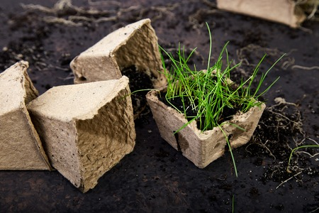 Peat pots with young seedlings, grass on a brown background. Concept of spring gardening.Eco