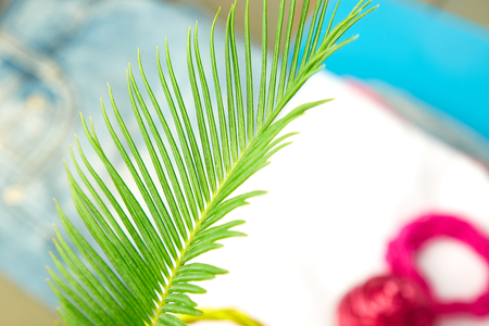 Summer tropical green palm leave background. Minimalist concept. flat lay, top view, copy space. Summer outfit blurred Stock Photo