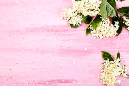 Flower of elder on pink background. Frame from elderflower. Top view. Flat lay. Copy space. Stok Fotoğraf