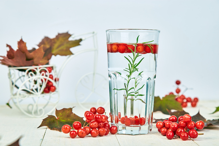 Glass of hot viburnum tea with rosemary on white wooden background, autumn maple red leaves and viburnum berries on white background. Winter. Christmas. Cold season.