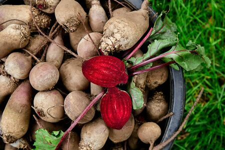 Fresh organic beetroot with green leaves in a basket. Beet after harvesting from village garden. Village gardening. Bio products healthy lifestyle. Banco de Imagens - 131017617