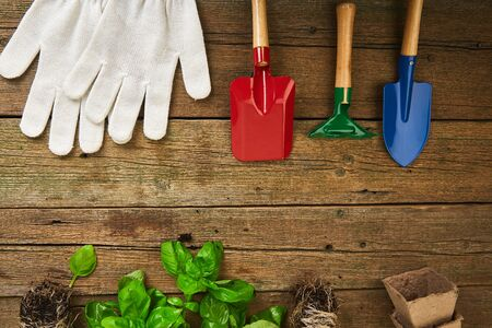 Flat lay of Gardening tools, basil, greens eco flowerpot, soil on wooden background. Spring garden works concept. Layout with free text space captured from above.
