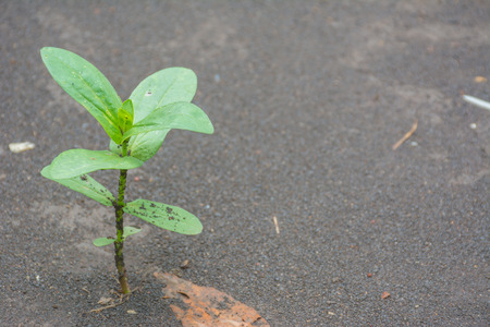 limp: Sapling of the tree with wet soil in background