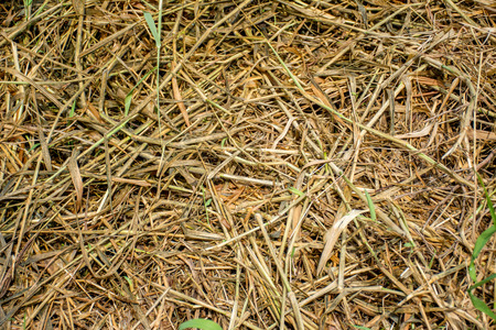 disconsolate: Dead grass, use for background or texture