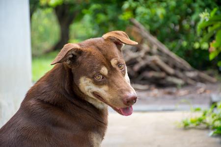 shephard: Concept of Dog thinking who are you. Stock Photo