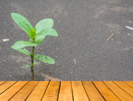 sodden: Wooden table with Sapling of the tree with wet soil in background Stock Photo