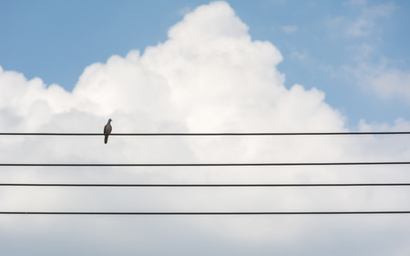insular: Eurasian Collared Dove on wire, feel lonely concept. Stock Photo