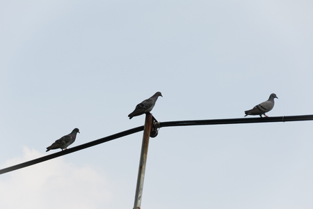 telephone pole: Pigeons on wires evening, use for feel lonely concept
