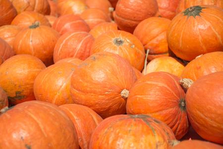 A lots of pumpkins, selective focus.