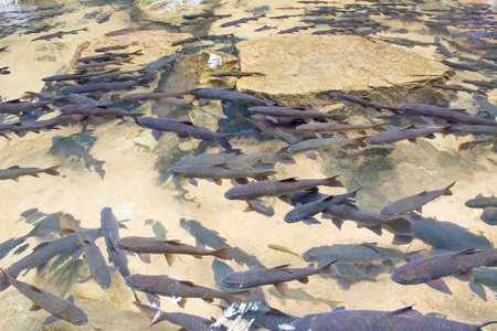 deep water: Selective focus of Many Fish in clear water at Namtokphlio National Park ,trat, thailand.
