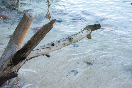 Selective focus of tree stumps on the beautiful beach and sea at koh wai island, Trat, Thailand