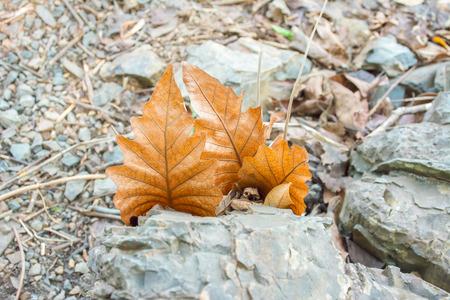 Dry leaf hang on stone. Imagens