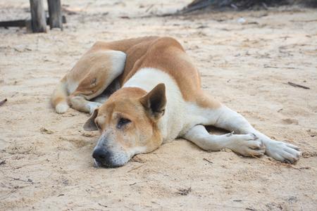 Dog have daytime sleepiness on sand.