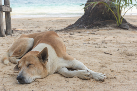 Dog have daytime sleepiness under coconut plam tree on the beautiful tropical beach.