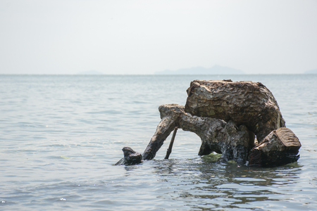 Tree stumps in the middle of sea at black sand beach, Trat, Thailand