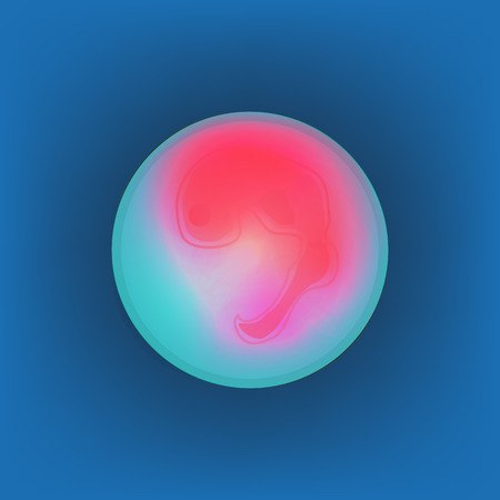 Human fetus inside the womb, stage of embryo development vector Illustration on blue background