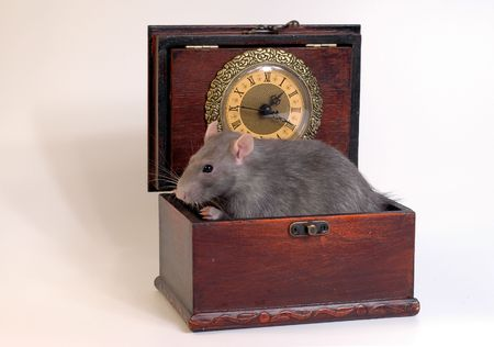 Home mouse sitting in case with clocks Stock Photo