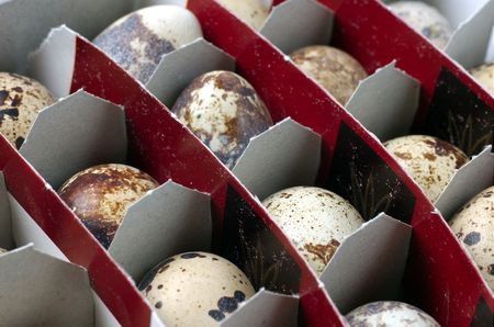 Pack of quail`s spotted eggs
