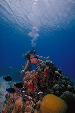 Een duiken meisje in een bikini vormt boven de koraalriffen in de warme wateren van St. Croix Island in US Virgin Islands.