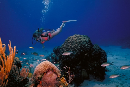 A scuba diving girl in a bikini poses above the coral reef in the warm waters at St. Croix Island in US Virgin Islands. photo