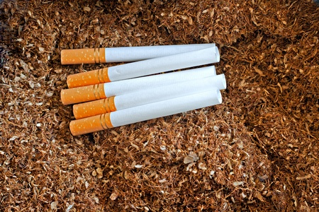 tobacco leaf: Cigarette tubes on loose tobacco Stock Photo
