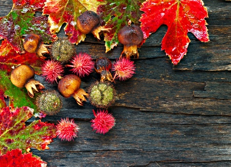 Colorful wet autumn leaves and berries arranged on stripped bark.