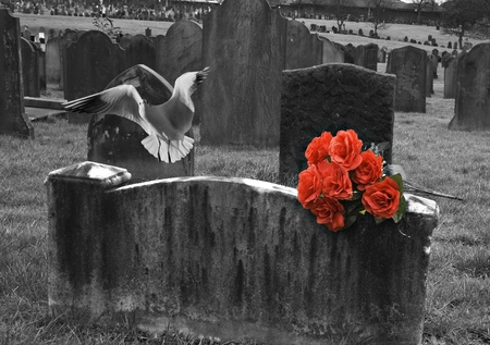 Blank headstone in graveyard with bunch of red roses and seagull in flight photo