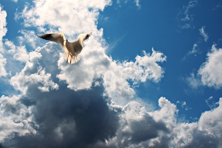wingspread: Seagull in flight against blue cloudy sky