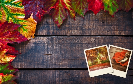 Colorful wet autumn leaves arranged on old wooden table photo