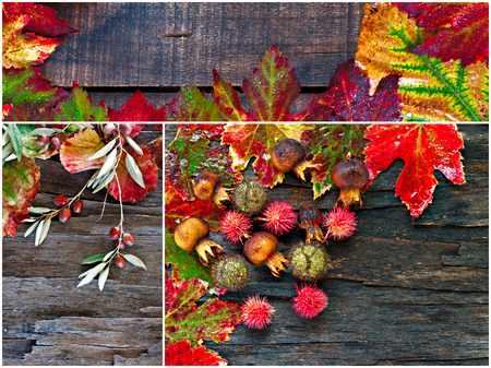 fall winter: Collage of fall, winter foliage on natural wooden background