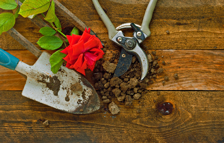 Gardening tools laid on rustic wooden boards