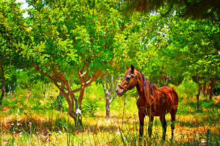 water chestnut: Digital painting of a chestnut horse out grazing in a field