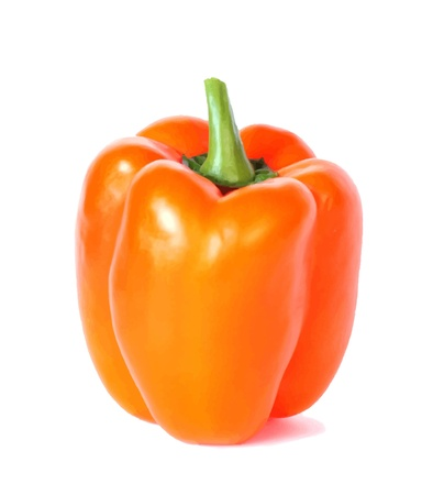 bell pepper, vector illustration Illustration