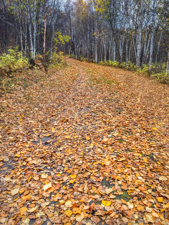 Fall leaves carpeting winding forest path, Alberta, Canada.