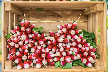 Display of delicious looking fresh raw red radishes for sale at local farmers market Stok Fotoğraf