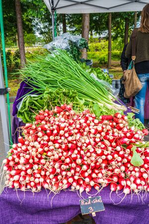 Display of delicious looking fresh raw red radishes for sale at local farmers market 版權商用圖片