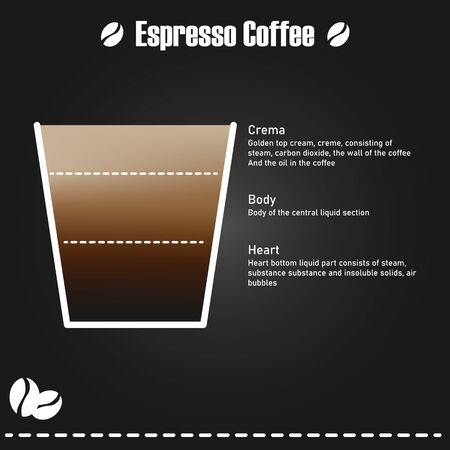 Infographic Espresso components, Espresso coffee has been available for more than 40 years. Can print the image as a shop decoration or give information in a coffee shop. Illustration and vector.