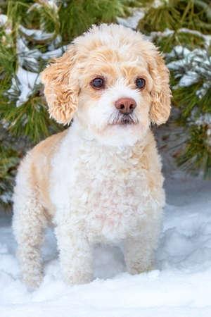 dog in the snow Reklamní fotografie - 100896071