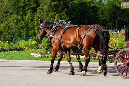 Two Horses Pulling Wagon Down Street on Mackinac Island, MI